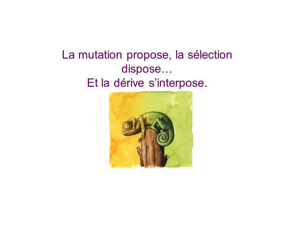 La mutation propose, la sélection dispose… Et la dérive s'interpose.