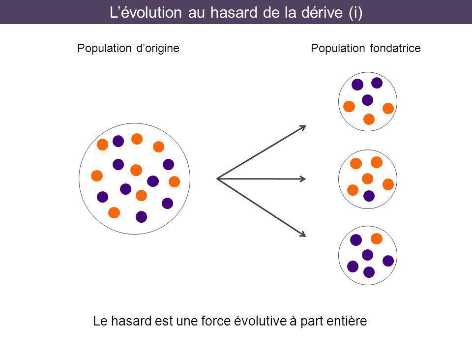 L'évolution au hasard de la dérive (i)