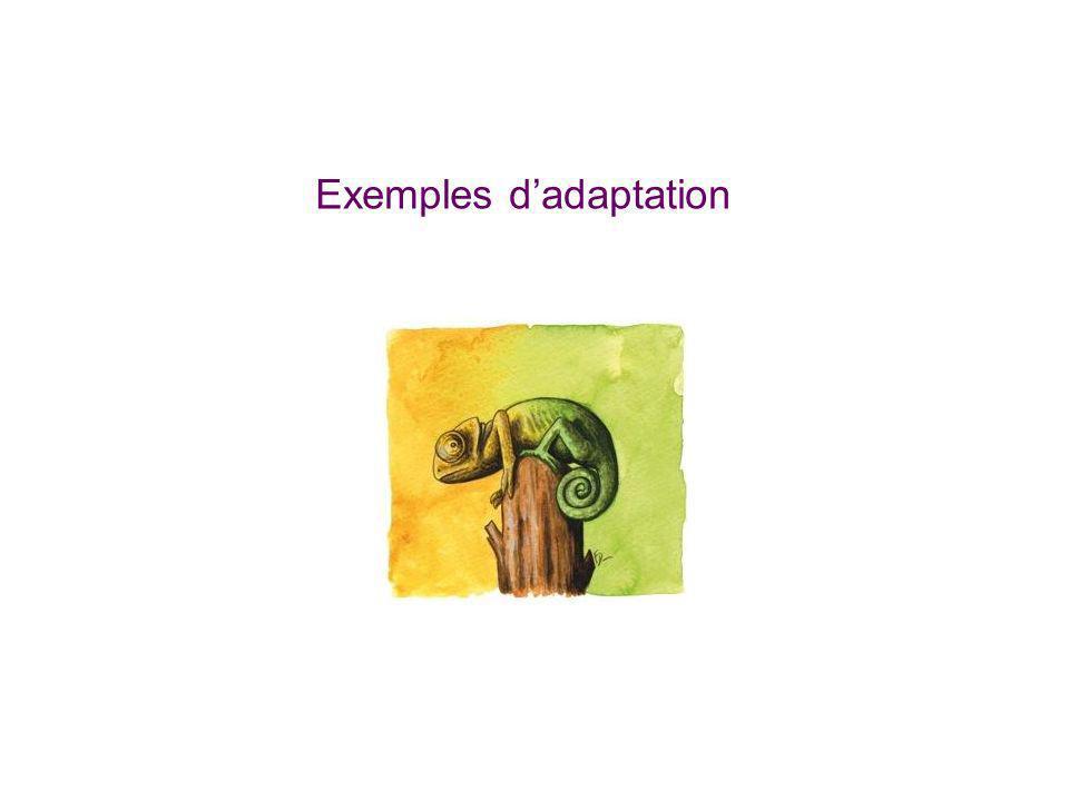 Exemples d'adaptation