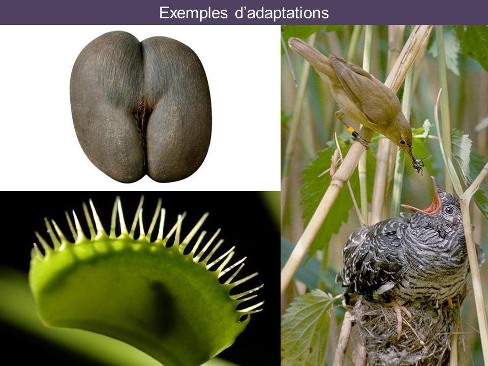 Exemples d'adaptations