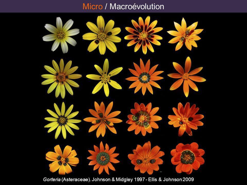 Micro / Macroévolution