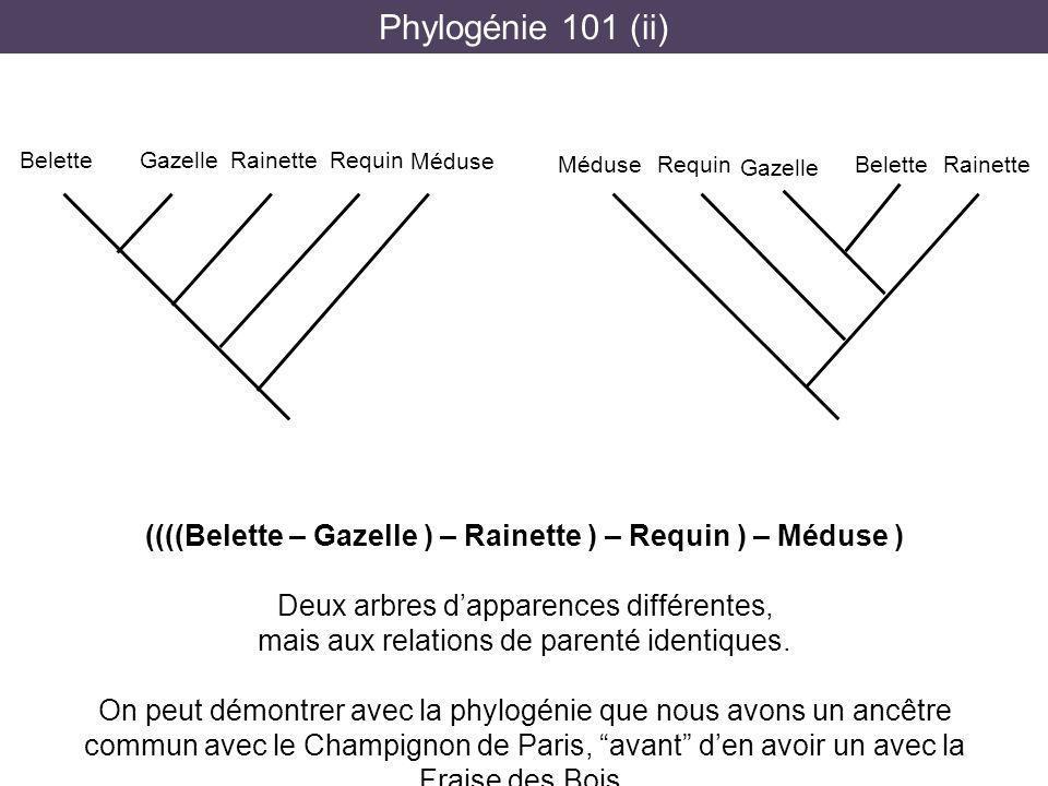Phylogénie 101 (ii) Belette. Gazelle. Rainette. Requin. Méduse. Belette. Gazelle. Rainette. Requin.