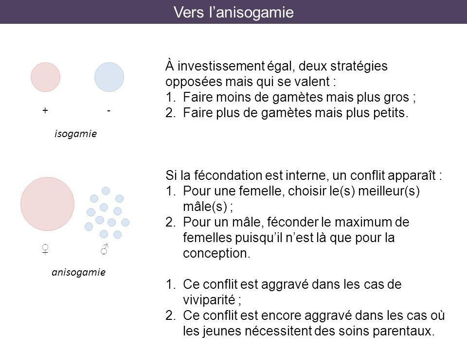 Vers l'anisogamie À investissement égal, deux stratégies opposées mais qui se valent : Faire moins de gamètes mais plus gros ;