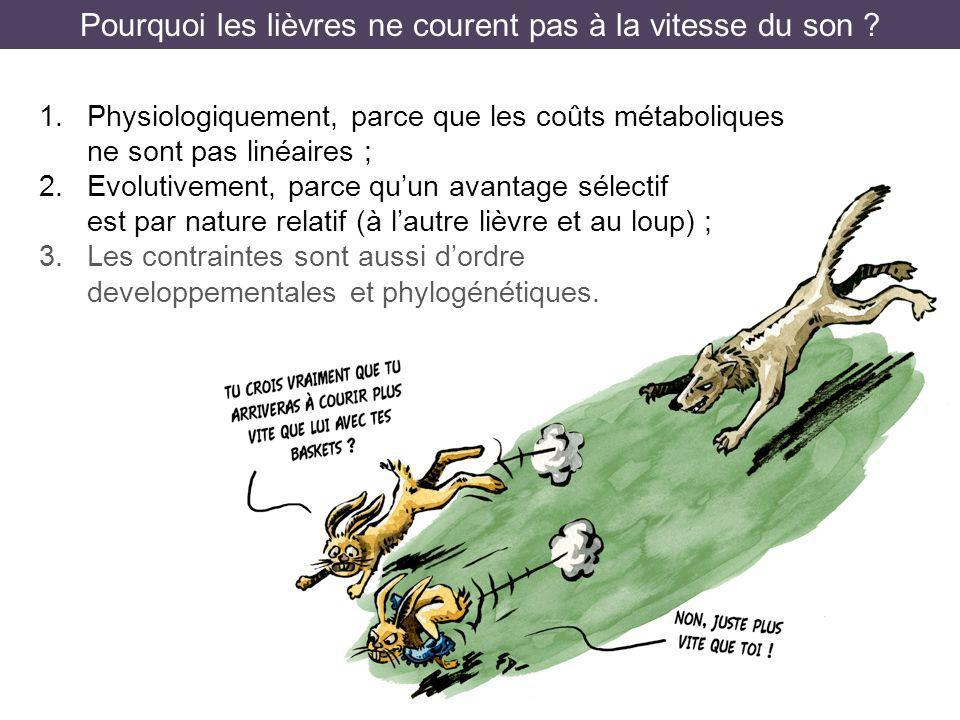 Pourquoi les lièvres ne courent pas à la vitesse du son