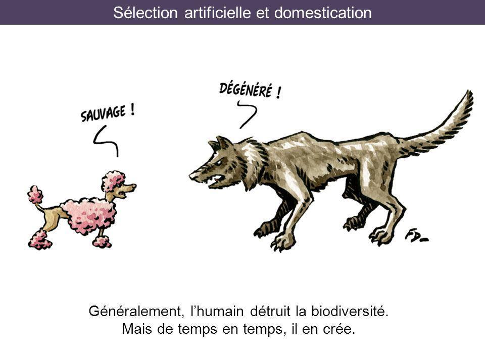 Sélection artificielle et domestication