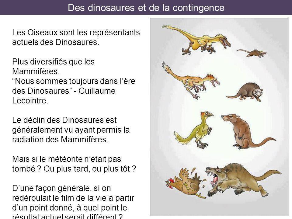 Des dinosaures et de la contingence