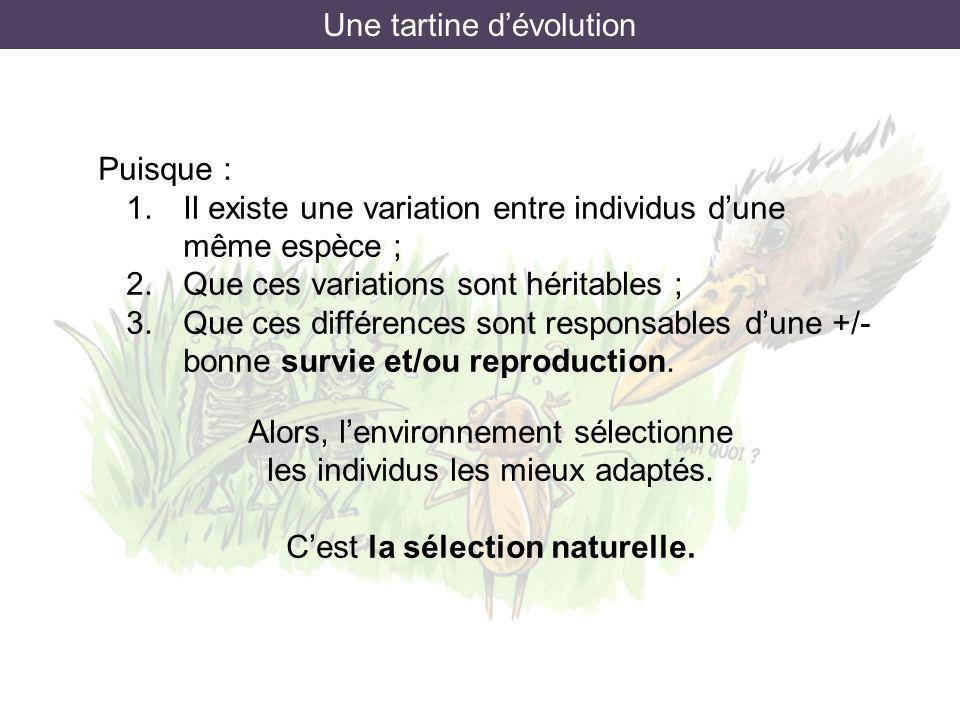 Une tartine d'évolution
