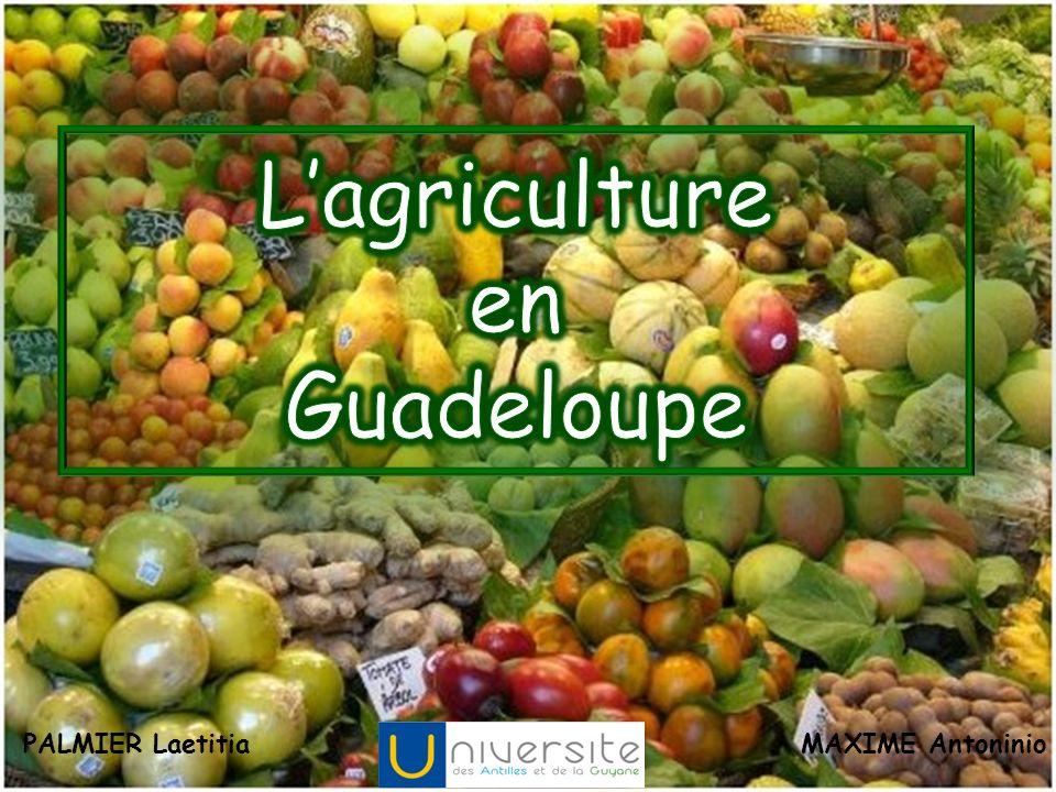 L'agriculture en Guadeloupe