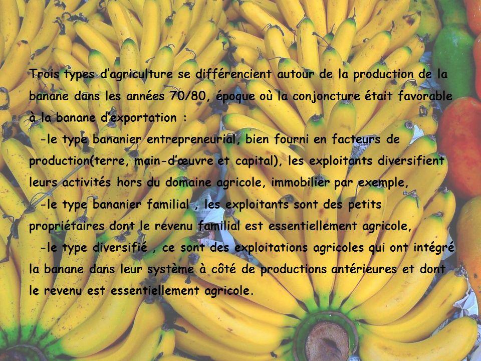 Trois types d'agriculture se différencient autour de la production de la banane dans les années 70/80, époque où la conjoncture était favorable à la banane d'exportation : -le type bananier entrepreneurial, bien fourni en facteurs de production(terre, main-d'œuvre et capital), les exploitants diversifient leurs activités hors du domaine agricole, immobilier par exemple, -le type bananier familial , les exploitants sont des petits propriétaires dont le revenu familial est essentiellement agricole, -le type diversifié , ce sont des exploitations agricoles qui ont intégré la banane dans leur système à côté de productions antérieures et dont le revenu est essentiellement agricole.
