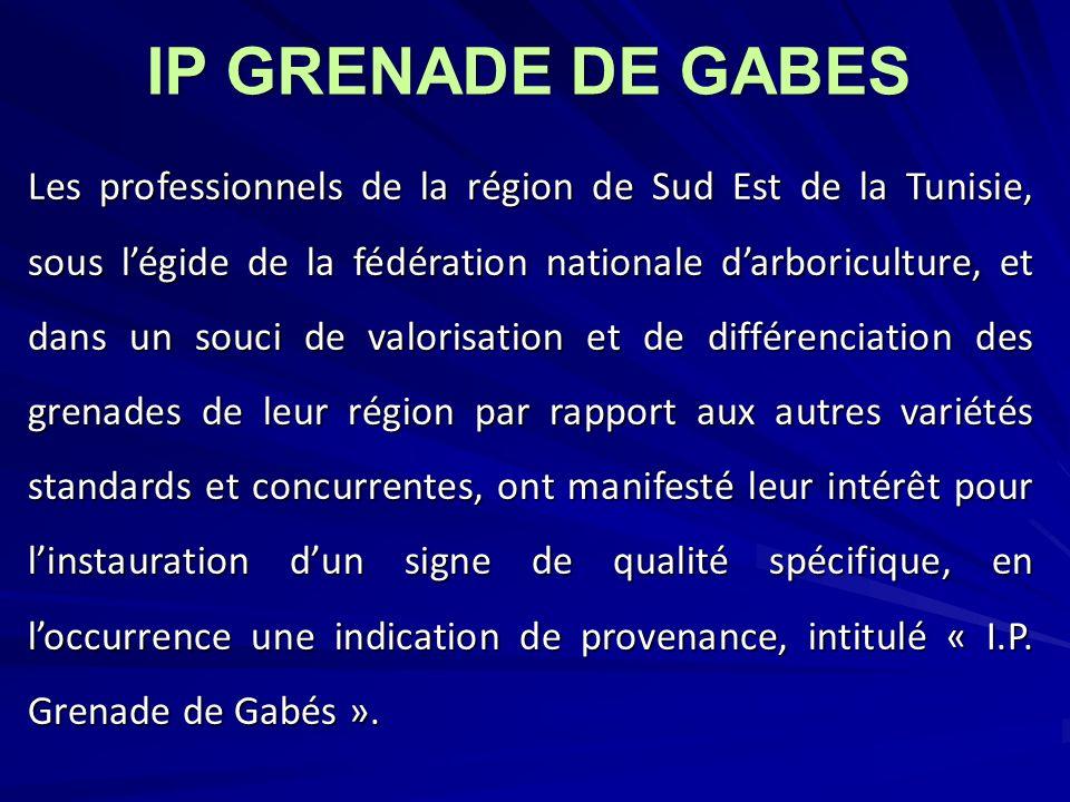 IP GRENADE DE GABES
