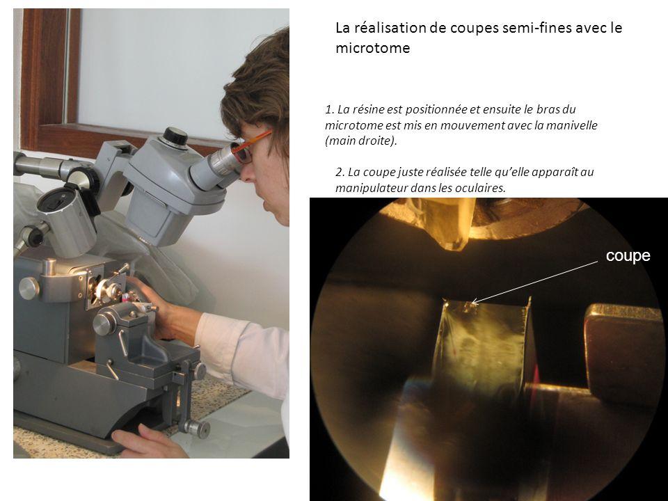 La réalisation de coupes semi-fines avec le microtome