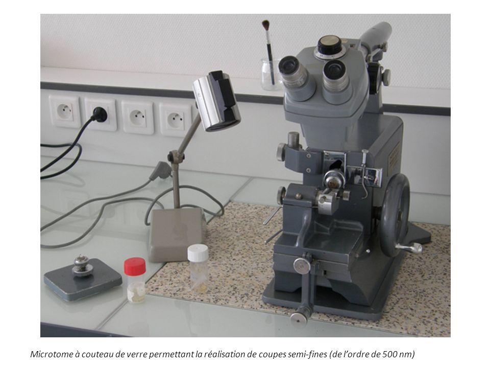 Microtome à couteau de verre permettant la réalisation de coupes semi-fines (de l'ordre de 500 nm)