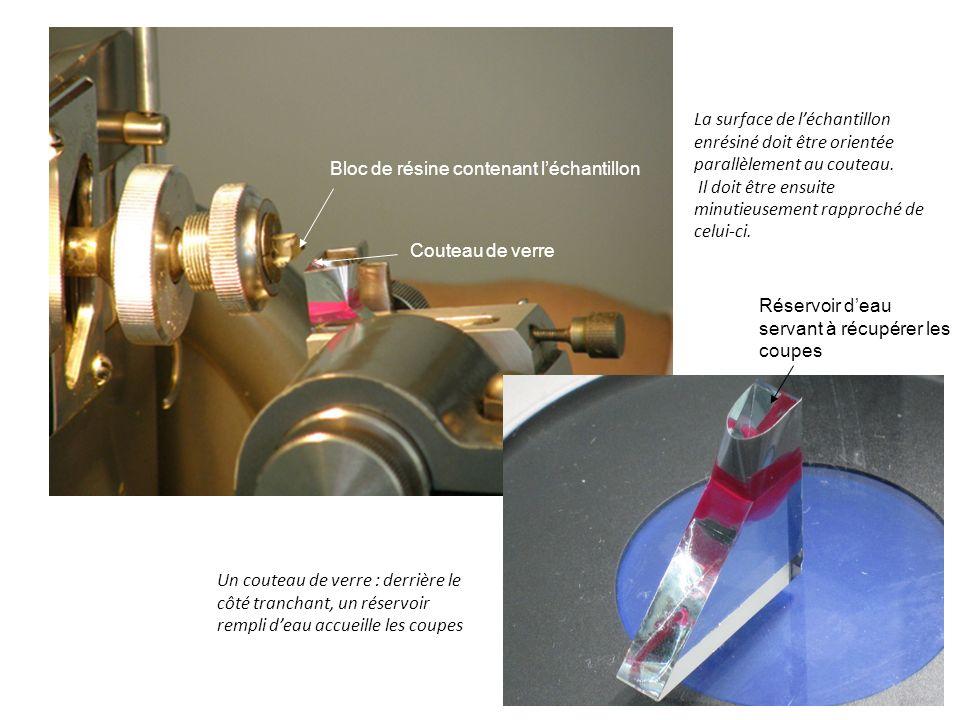 La surface de l'échantillon enrésiné doit être orientée parallèlement au couteau.