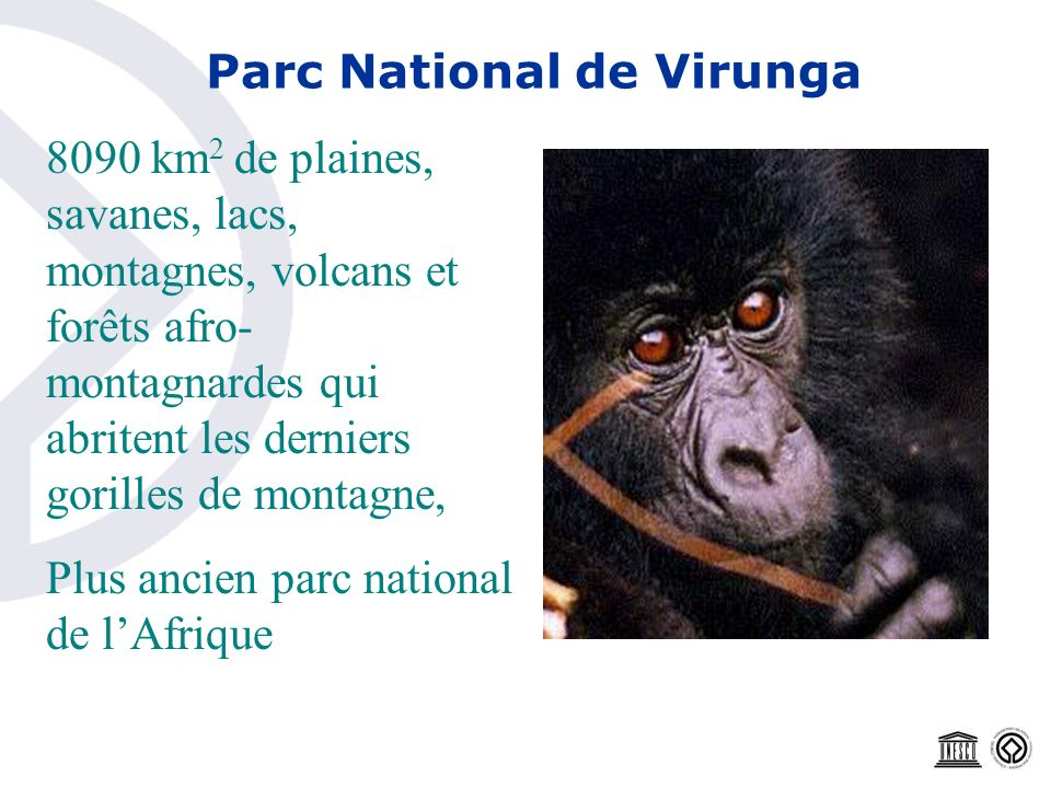 Parc National de Virunga