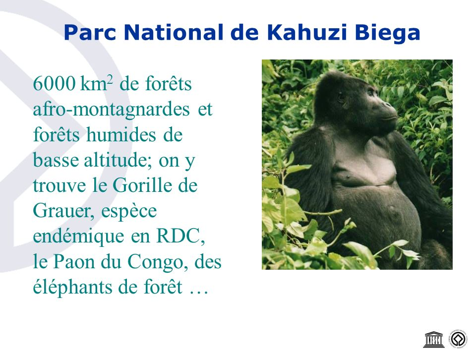 Parc National de Kahuzi Biega