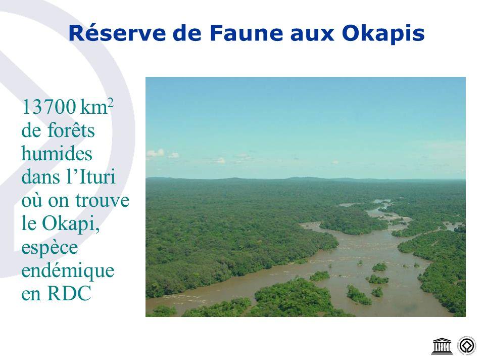 Réserve de Faune aux Okapis