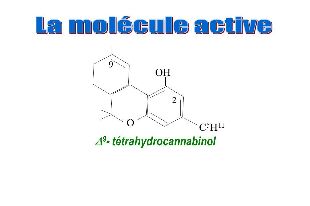 9- tétrahydrocannabinol
