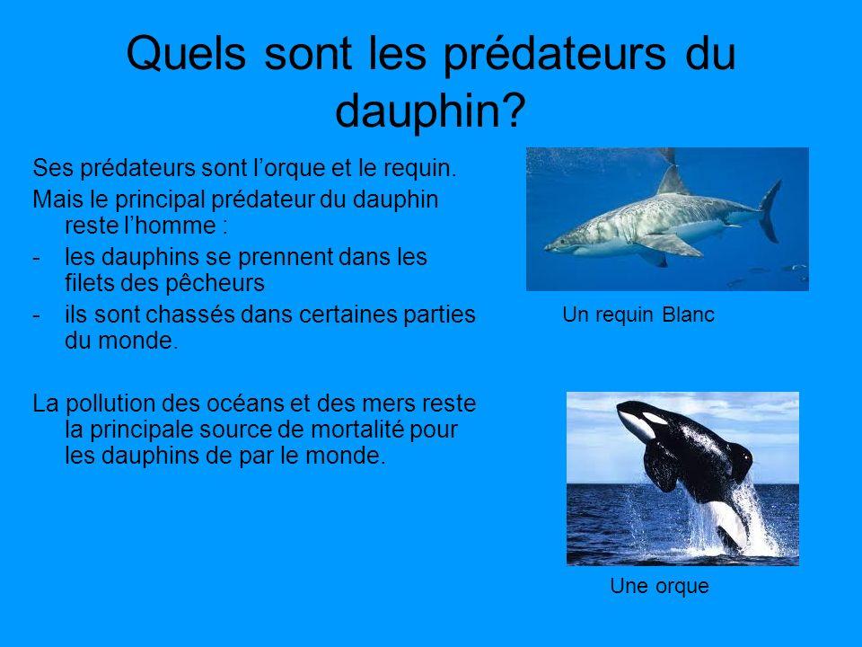 Quels sont les prédateurs du dauphin