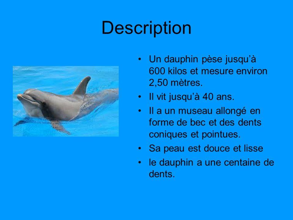Description Un dauphin pèse jusqu'à 600 kilos et mesure environ 2,50 mètres. Il vit jusqu'à 40 ans.