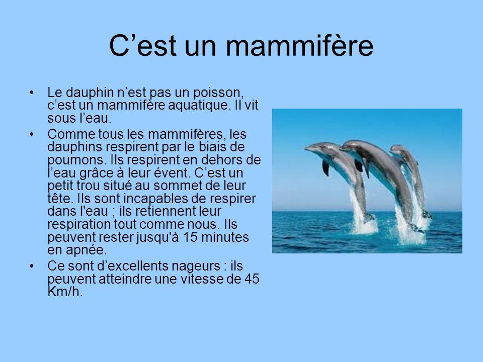 C'est un mammifère Le dauphin n'est pas un poisson, c'est un mammifère aquatique. Il vit sous l'eau.