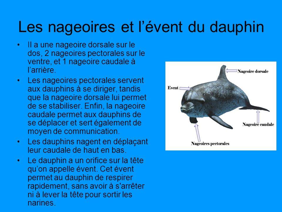 Les nageoires et l'évent du dauphin
