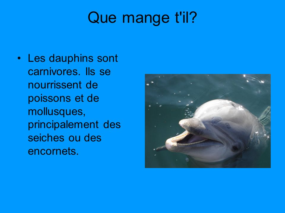 les dauphins expos de lucas wild ce2 ppt video online t l charger. Black Bedroom Furniture Sets. Home Design Ideas