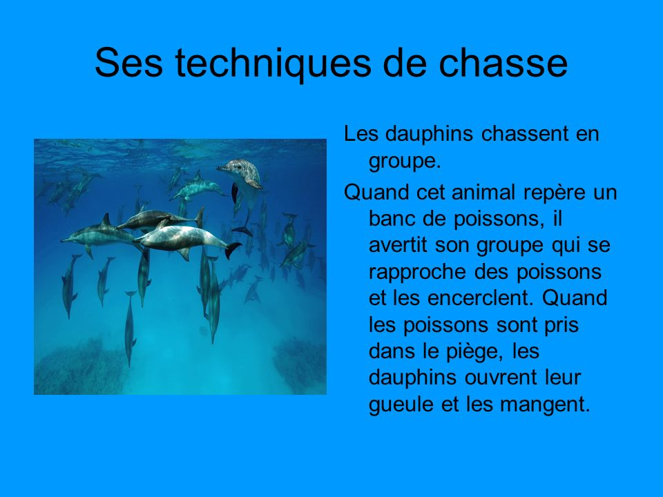les dauphins expos de lucas wild ce2 ppt video online. Black Bedroom Furniture Sets. Home Design Ideas