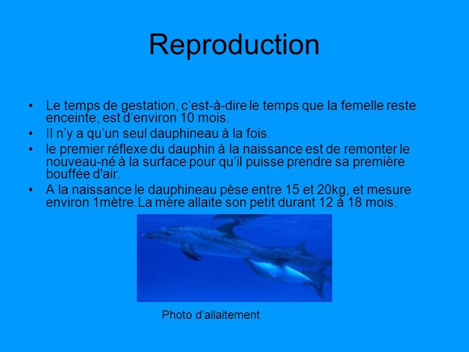 Reproduction Le temps de gestation, c'est-à-dire le temps que la femelle reste enceinte, est d'environ 10 mois.