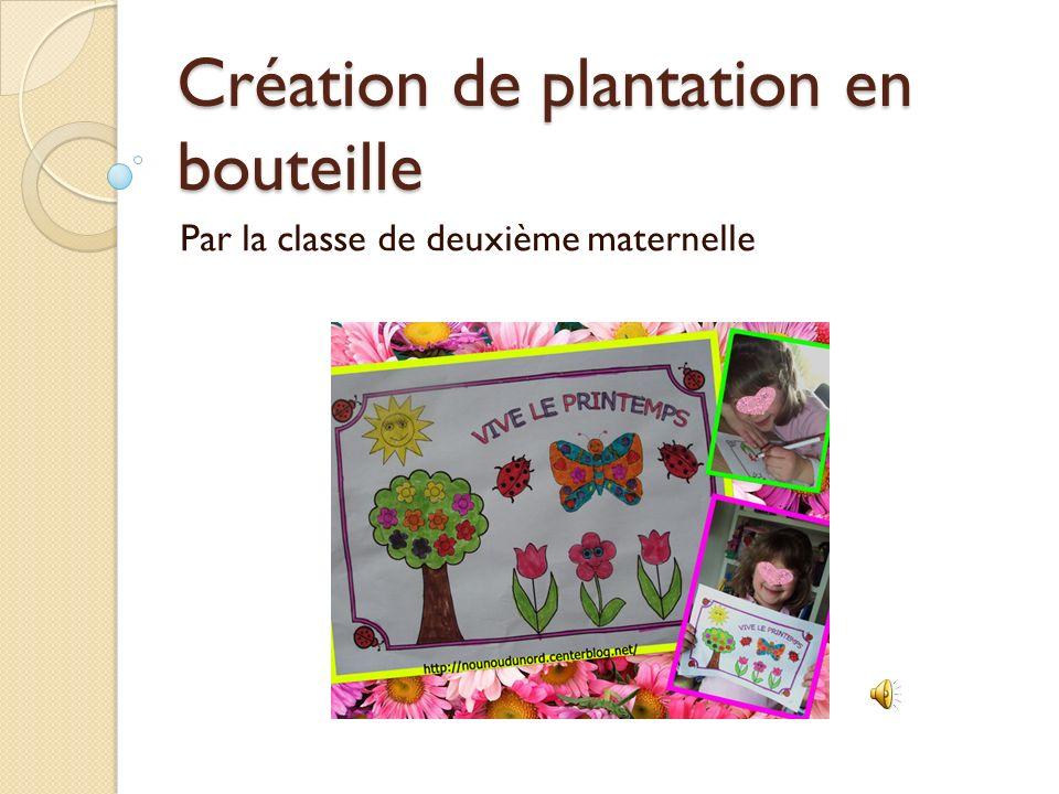 Création de plantation en bouteille