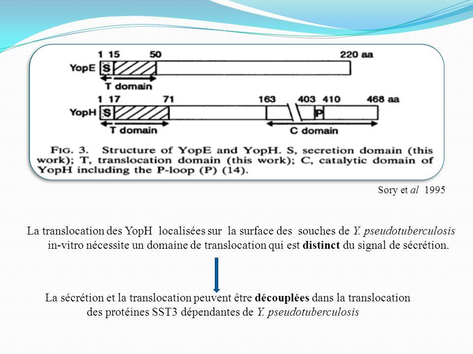des protéines SST3 dépendantes de Y. pseudotuberculosis