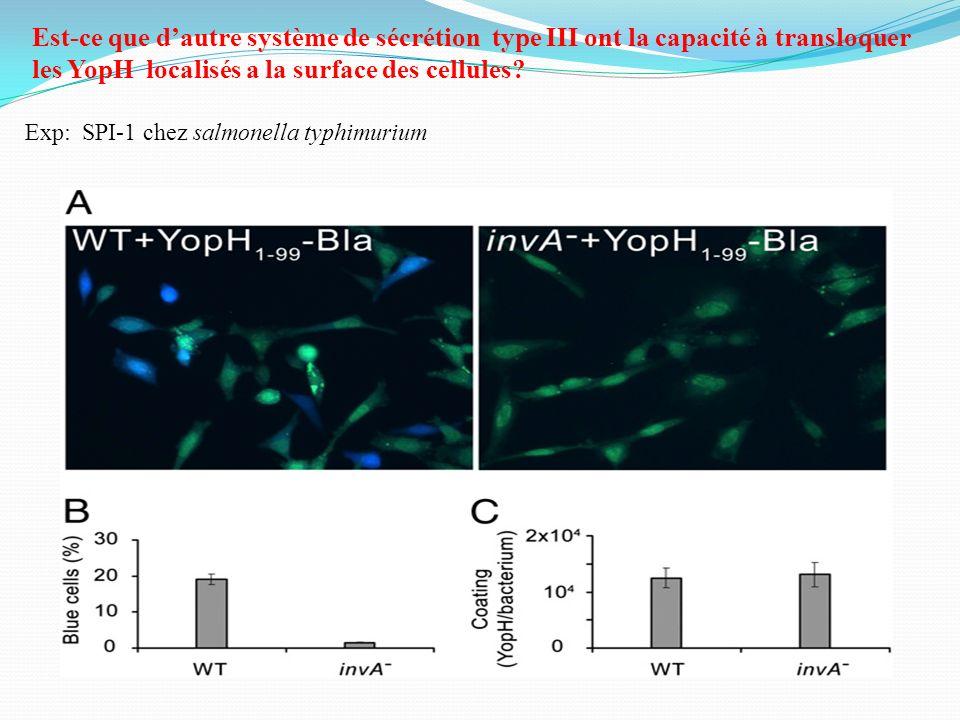 Est-ce que d'autre système de sécrétion type III ont la capacité à transloquer les YopH localisés a la surface des cellules