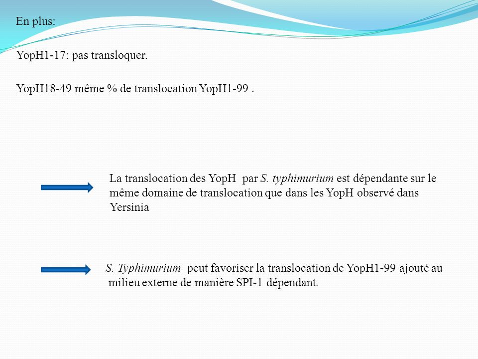 En plus: YopH1-17: pas transloquer. YopH18-49 même % de translocation YopH1-99 .