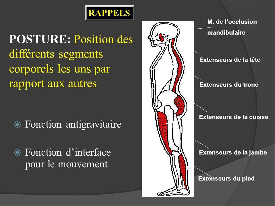 RAPPELS M. de l'occlusion. mandibulaire. POSTURE: Position des différents segments corporels les uns par rapport aux autres.