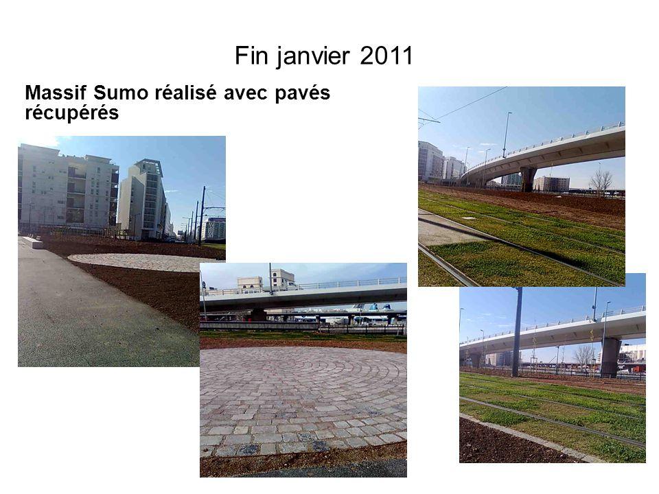 Fin janvier 2011 Massif Sumo réalisé avec pavés récupérés