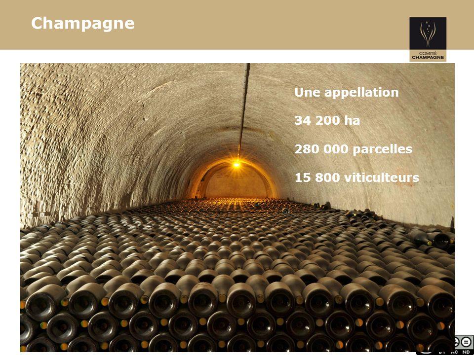 Champagne Une appellation 34 200 ha 280 000 parcelles