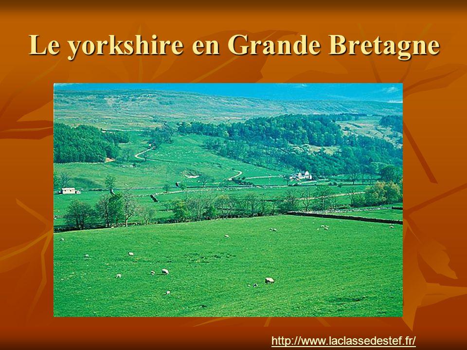 Le yorkshire en Grande Bretagne