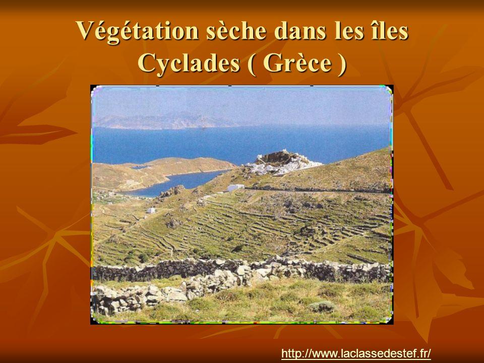 Végétation sèche dans les îles Cyclades ( Grèce )