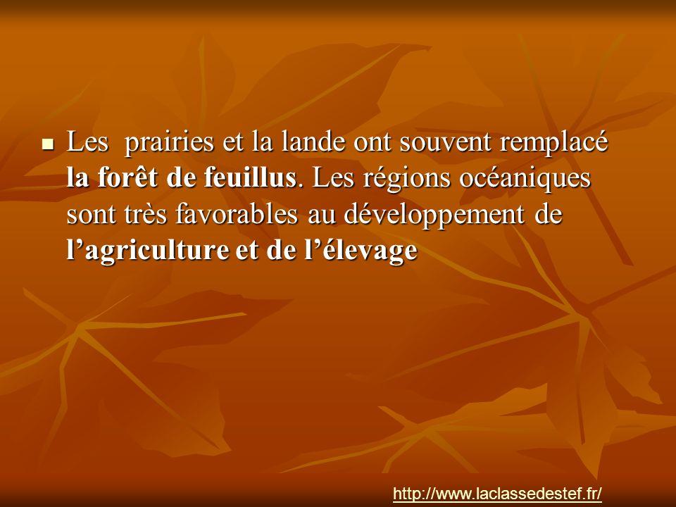 Les prairies et la lande ont souvent remplacé la forêt de feuillus
