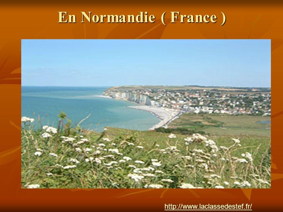 En Normandie ( France ) http://www.laclassedestef.fr/ Auteur : Nathalie