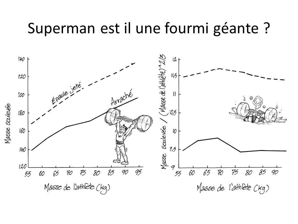 Superman est il une fourmi géante