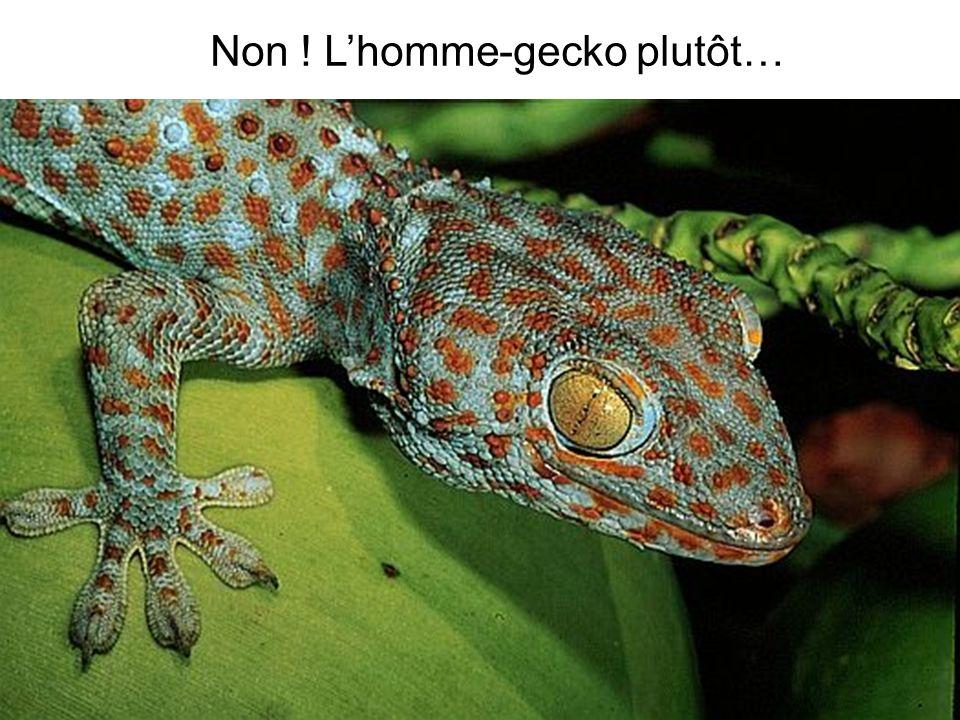 Non ! L'homme-gecko plutôt…