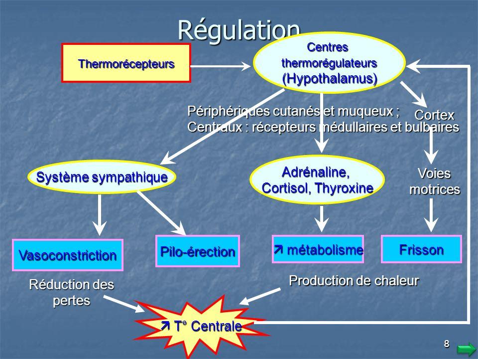 Régulation (Hypothalamus) Périphériques cutanés et muqueux ;