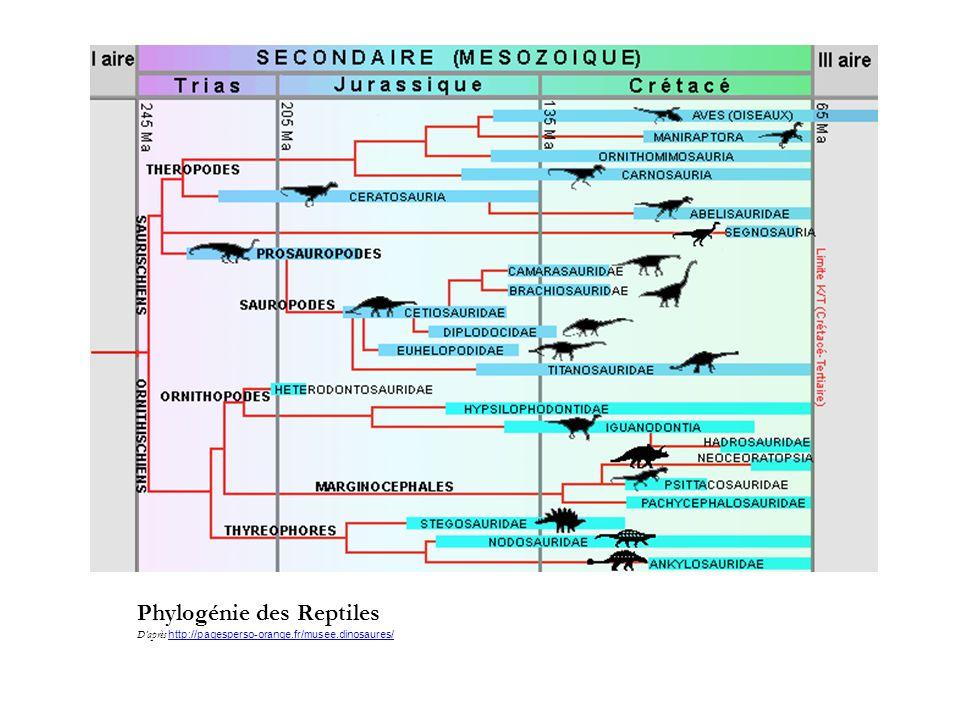 Phylogénie des Reptiles