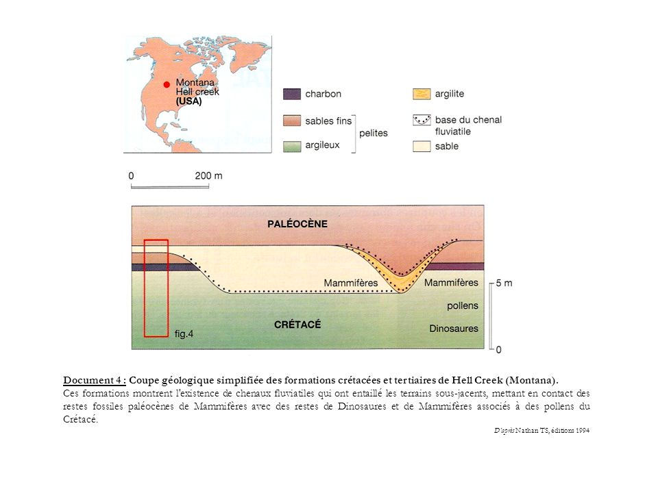 Document 4 : Coupe géologique simplifiée des formations crétacées et tertiaires de Hell Creek (Montana).