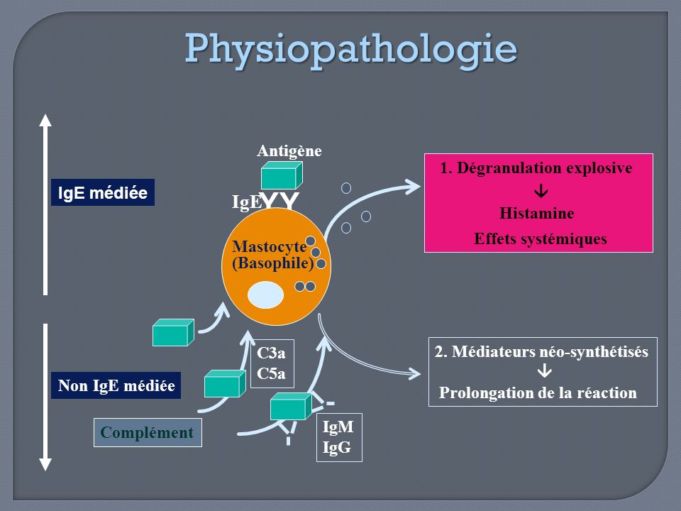 Physiopathologie Y IgE Antigène 1. Dégranulation explosive 