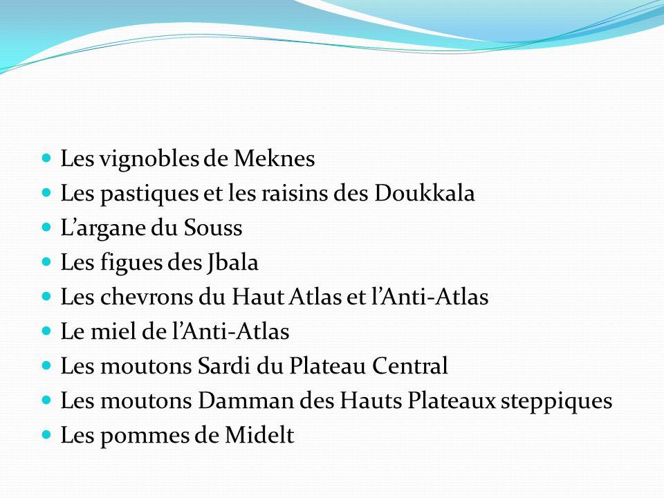 Les vignobles de Meknes