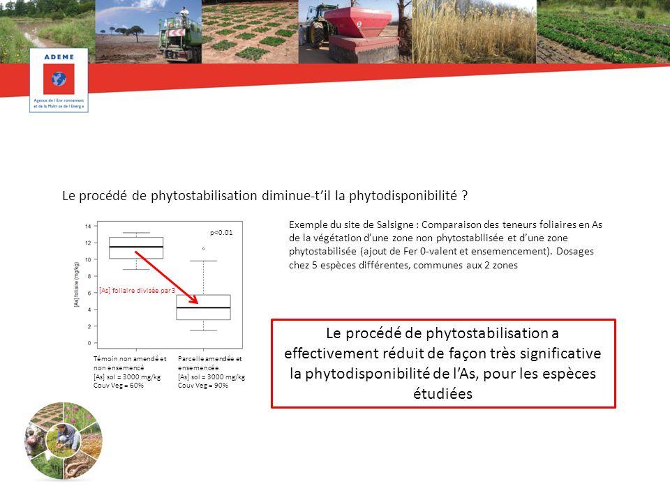 Le procédé de phytostabilisation diminue-t'il la phytodisponibilité