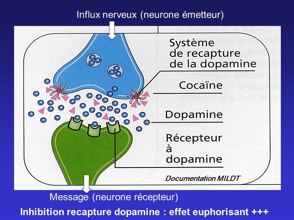 Influx nerveux (neurone émetteur)