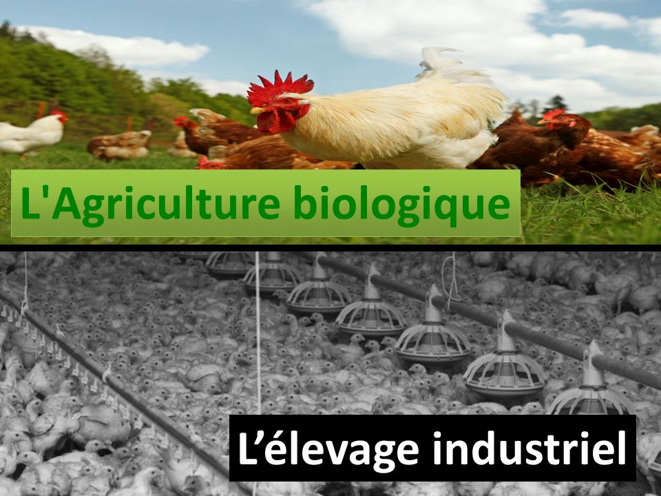 L Agriculture biologique