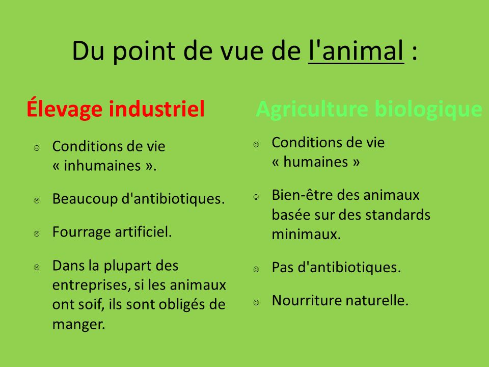 Du point de vue de l animal :